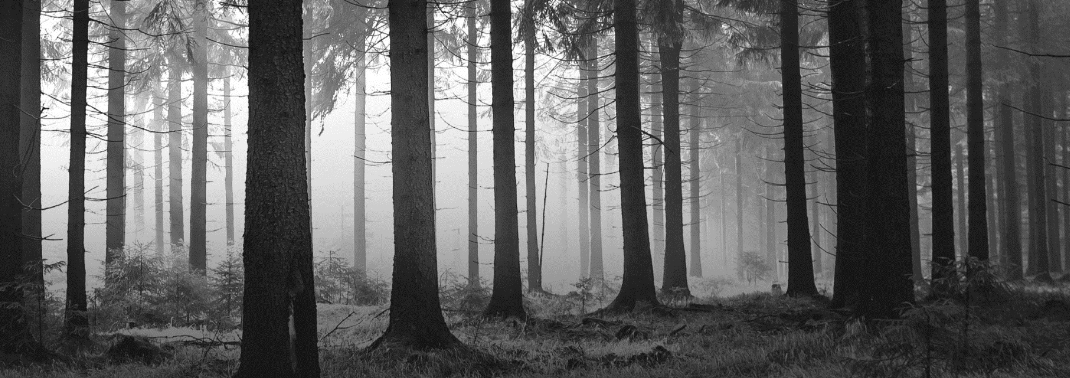 Forsttechnik Farmi Forest und Husqvarna Motorsägen
